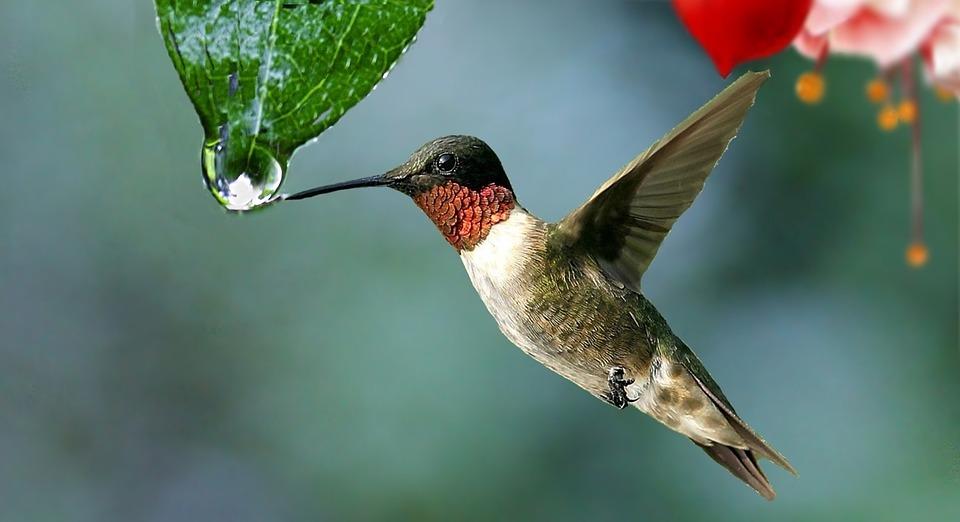 Je suis un colibri (et ça soulage)