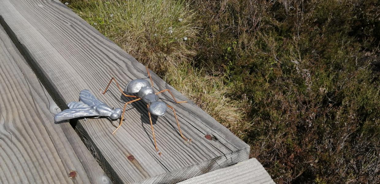 Cigale et fourmi